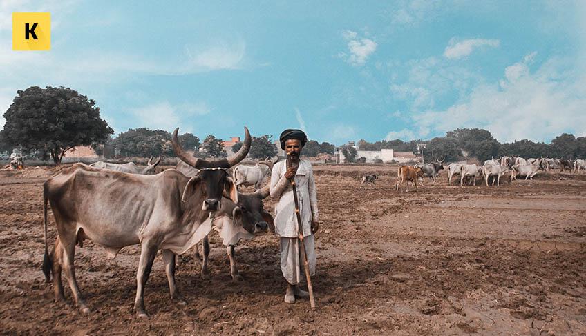 фермерское банкротство