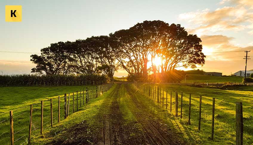 Как купить или продать участок земли под ферму или ЛПХ? Условия, порядок, плюсы и минусы сделки